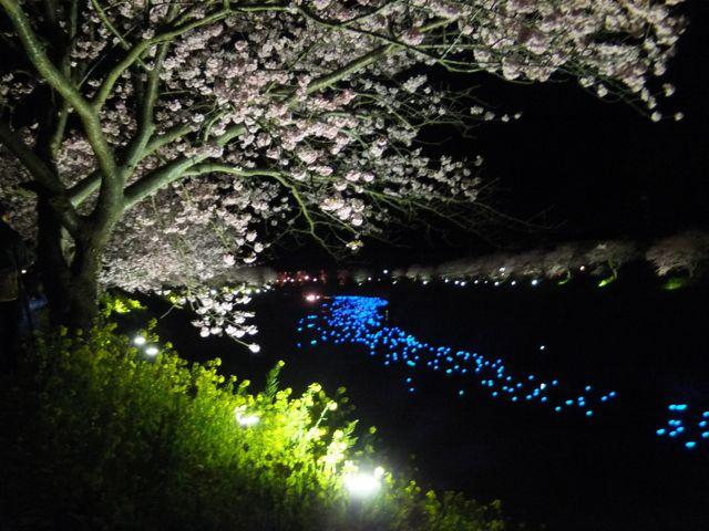DSCF0206夜桜と流れるLED