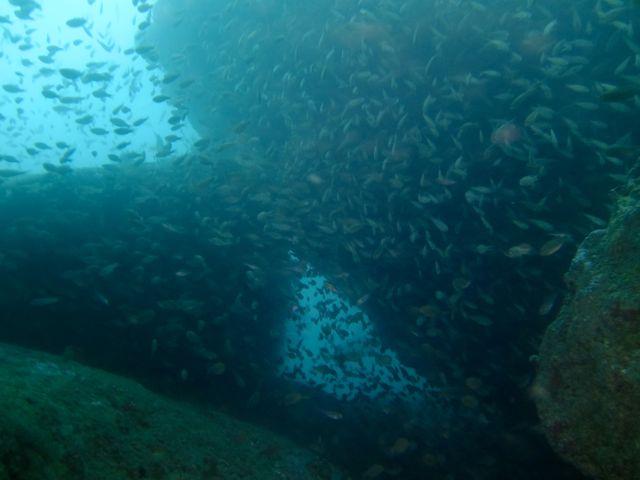 DSCF0275クランクの魚影