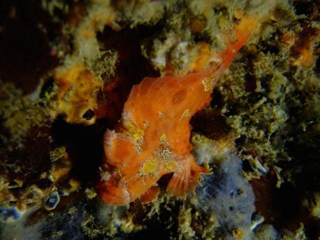 DSCF0315ロッカク岩カエル