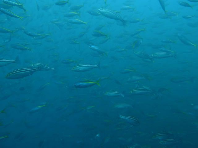 DSCF0324魚影