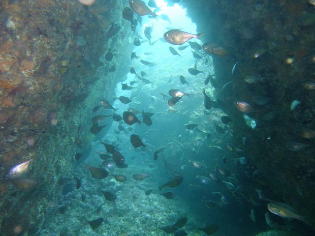 DSCF0351田子島の穴