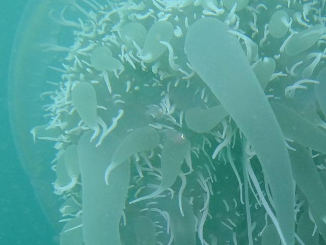 DSCF0443クラゲの中の魚