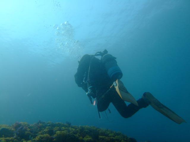 DSCF0508泳ぐかねこ