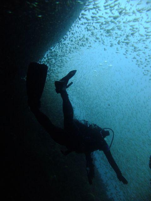 DSCF1213キンメに飛び込む