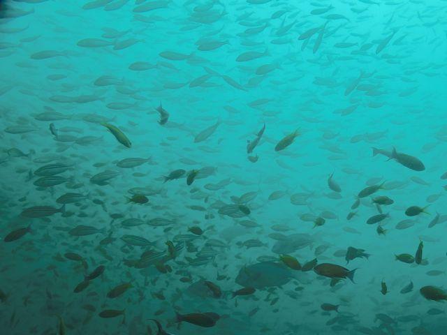 DSCF2140太根魚影
