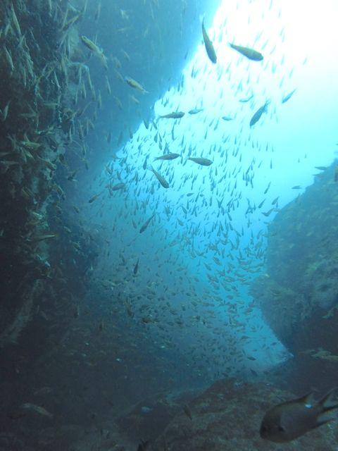DSCF2700クランクの魚影