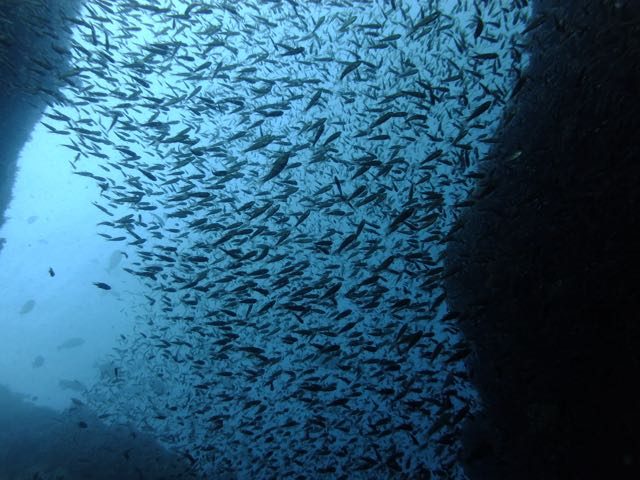 DSCF3335魚影