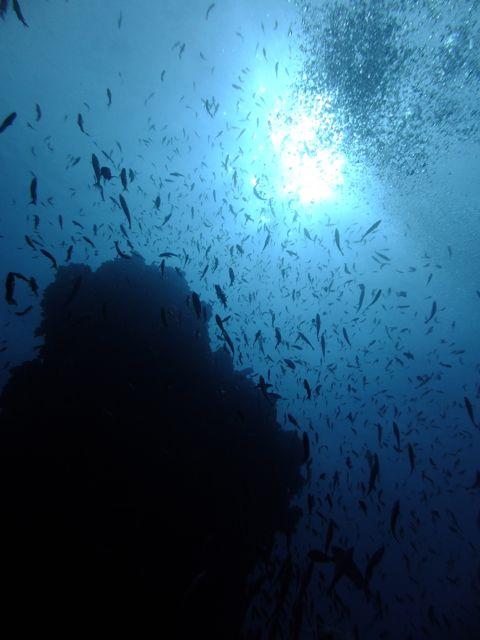 DSCF3794魚影