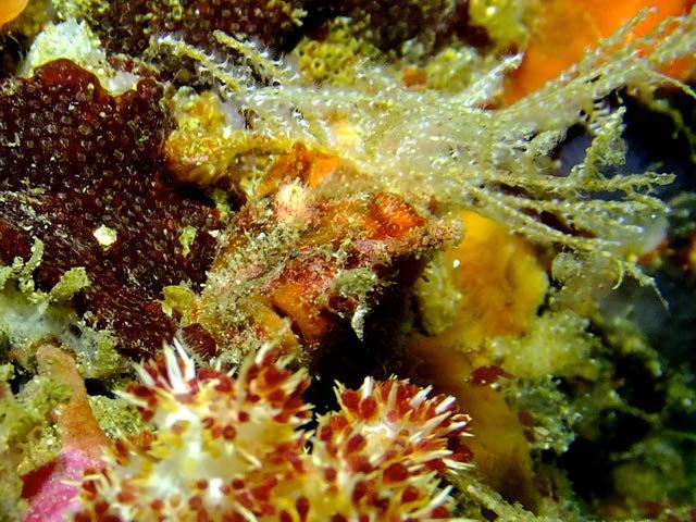 DSCF5792ロッカク岩カエル