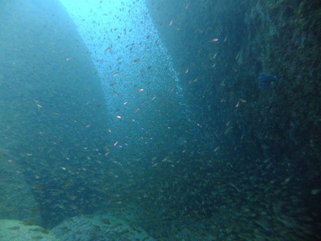 DSCF5841黒崎の魚影