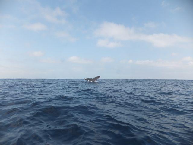 DSCF6038もっちぃのクジラテール