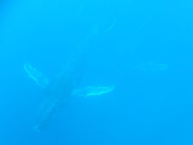 DSCF6040もっちぃ親子クジラ