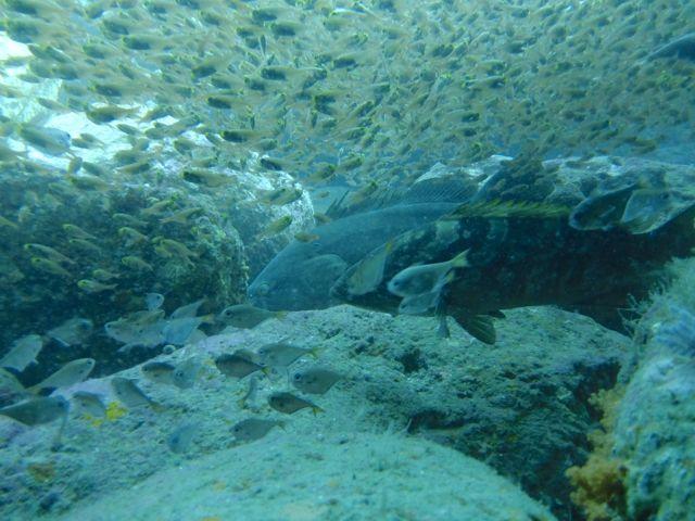 DSCF6067クエ2匹と魚群