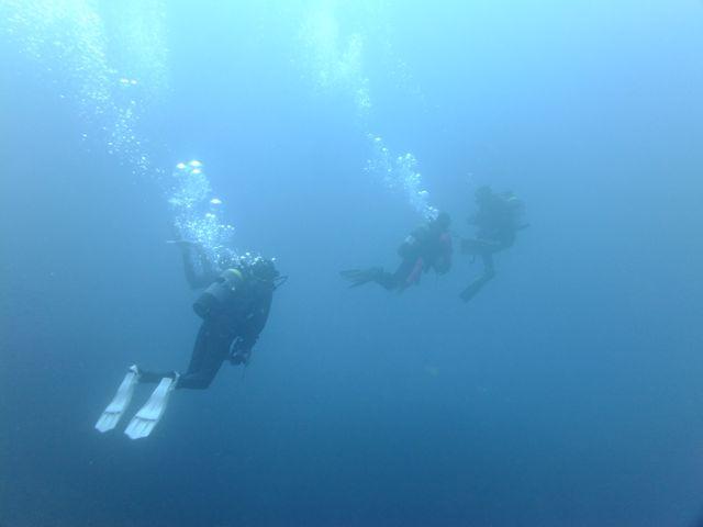 DSCF6143中層を泳ぐ