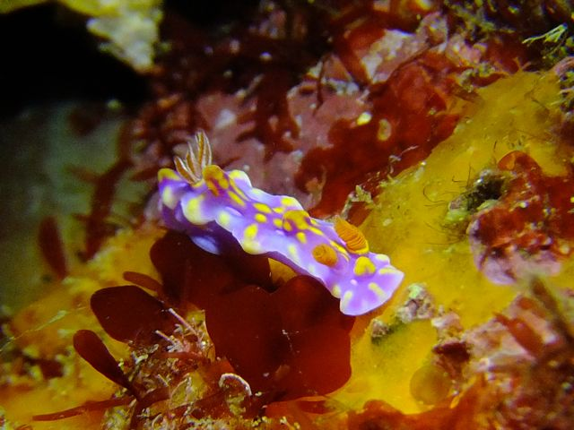 DSCF6537ミアミラ幼体