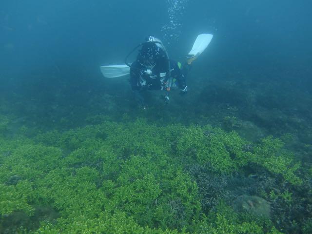 DSCF6602サンゴの群生