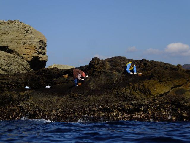DSCF6711岩海苔採り
