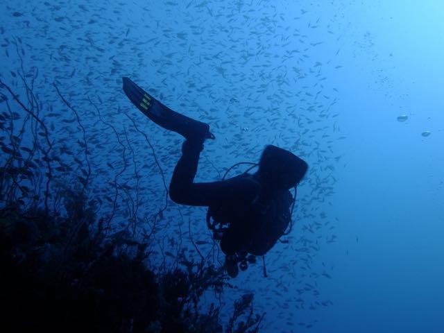 DSCF6806魚影