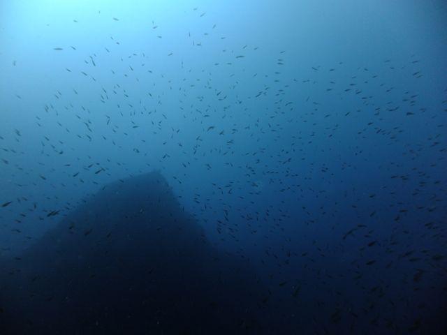 DSCF6832魚影