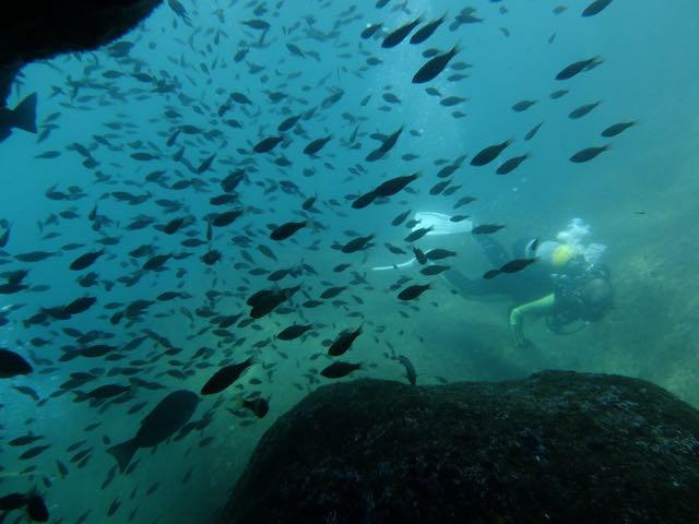 DSCF7061魚群とダイバー