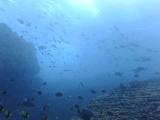 DSCF7147魚影