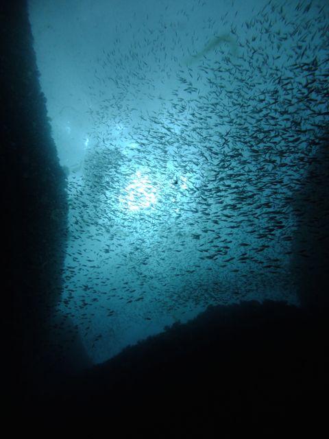 DSCF7149魚群