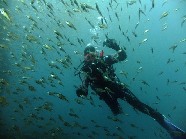 DSCF7172魚影の中のダイバー