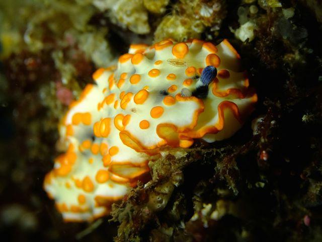 DSCF7203ハナオトメ