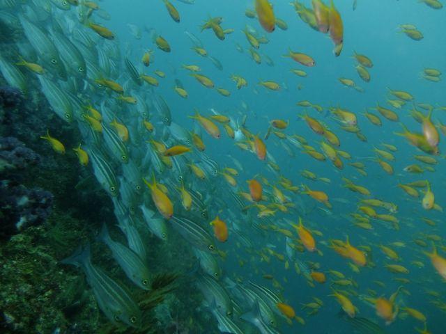 DSCF7255魚群