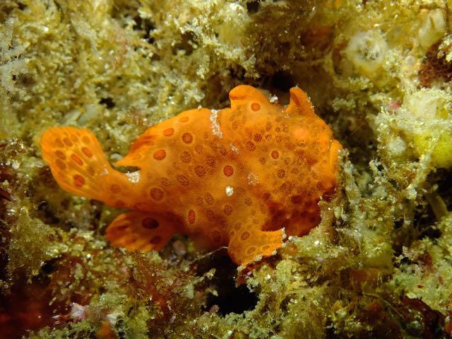 DSCF7519ロッカクのオレンジ