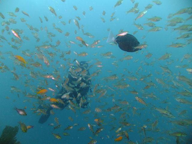 DSCF7899魚越しダイバー