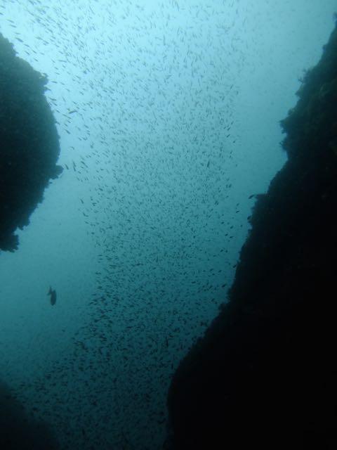 DSCF7954魚影