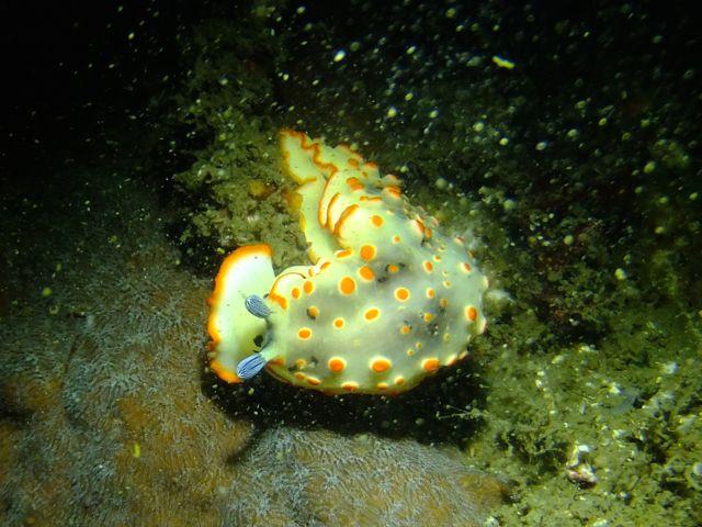DSCF8215ハナオトメ