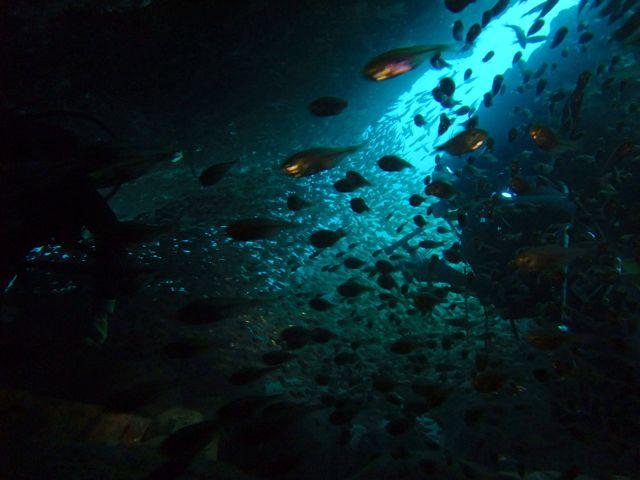 DSCF8234黒崎のトンネル