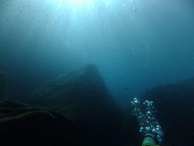 DSCF8238三競・明るい水中