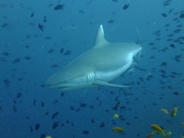 DSCF8267サメ