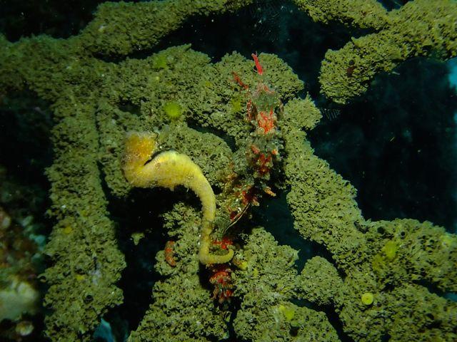 DSCF8286赤トゲと黄ハナタツ