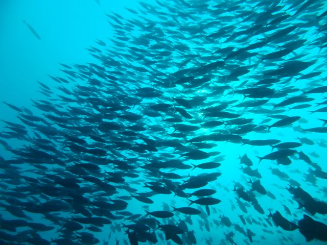DSCF8288魚影