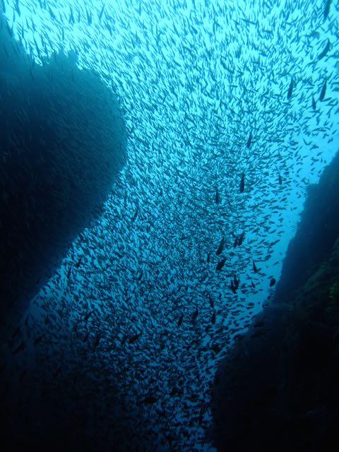 DSCF8564クランクの魚影