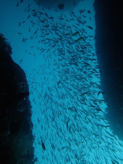 DSCF8664魚群