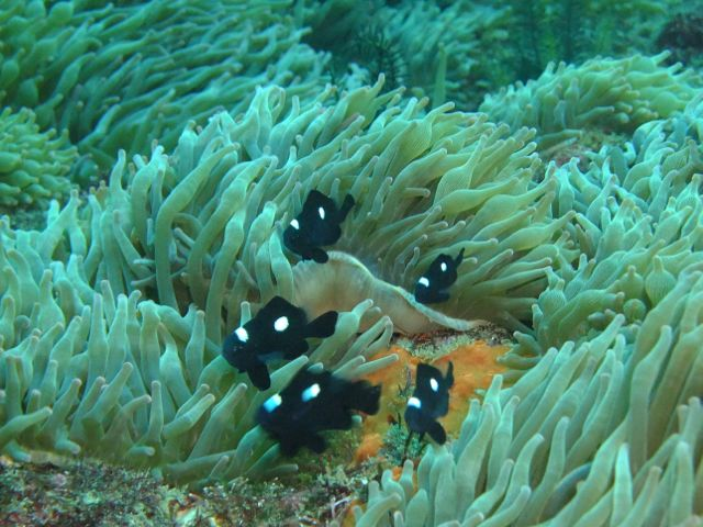 DSCF9049ミツボシクロスズメ