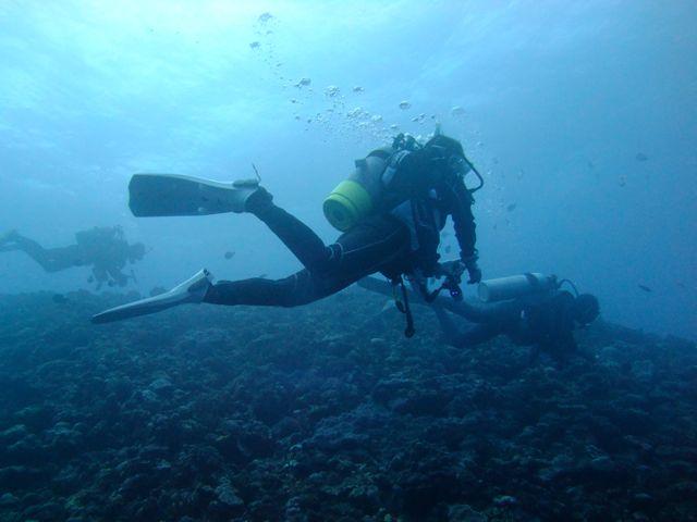 DSCF9301泳ぐ