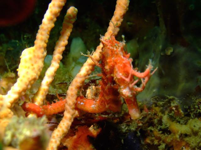 DSCF9471赤トゲ