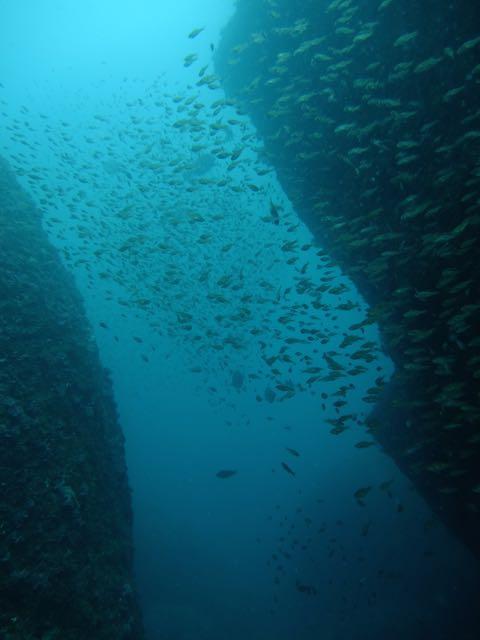 DSCF9659魚影