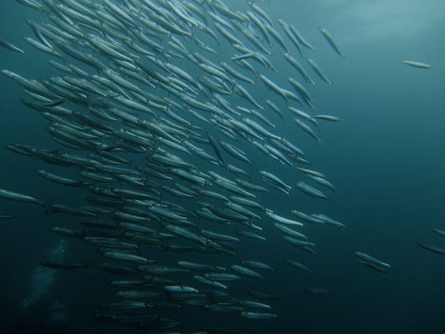 DSCF9778_2本目の魚影