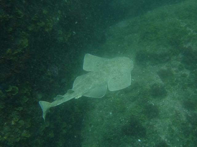 DSCF9967カスザメ