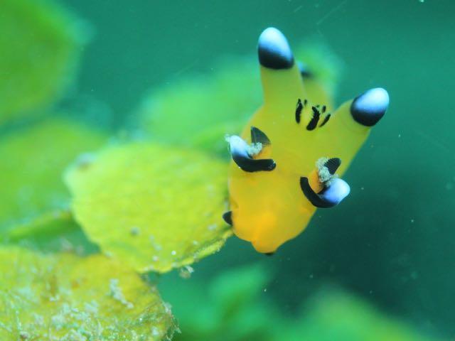 IMG_0336海藻の上のピカチュウ