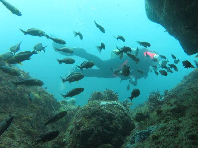 IMG_0811魚越しのダイバー