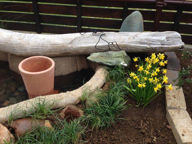 IMG_2395鉢と水仙