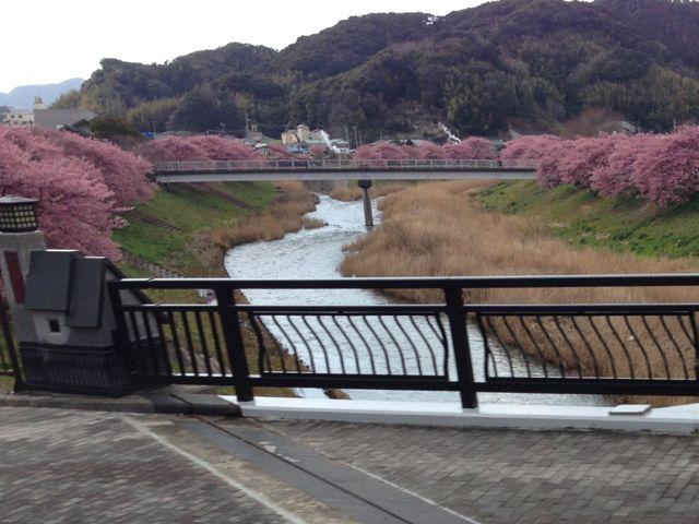 IMG_2575みなみの桜